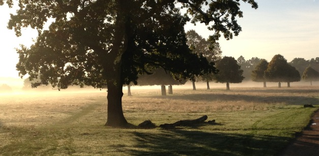 Richmond Park - Misty October Morning