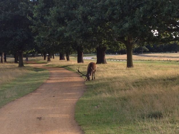 Richmond Park - SeptemberAfternoon